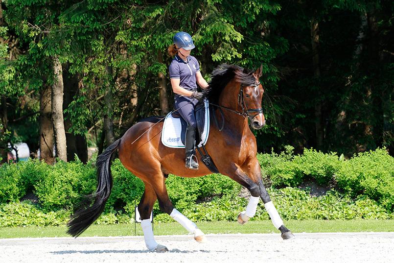 Der-großlinige-Statement-(v.Oliver-Twist)-wurde-von-seiner-ständigen-Reiterin-Stephanie-Leuenberger-vorgestellt