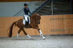 Pferd_0149