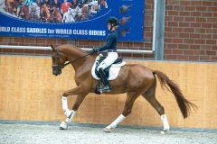 Pferd_0166