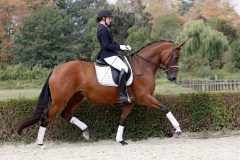 Reitpferd Heide-Cardofine v. Cadeau-Finley-M,Lune_Jancke