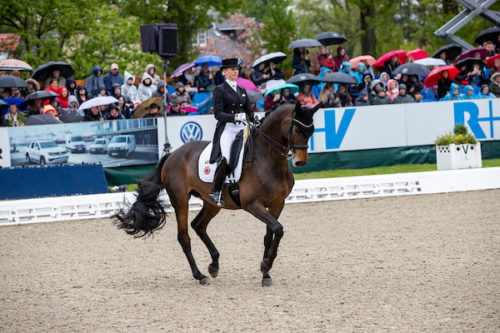 Hagen – Horses and Dreams 2019