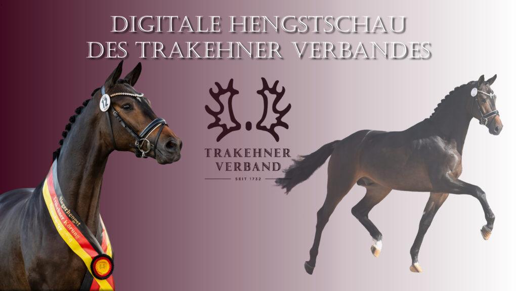 Digitale Hengstschau_Thumbnail_hohe Auflösung